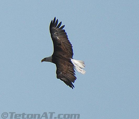 TetonAT.com Eagle 5