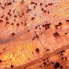 Rust crackle (tina negus) Tags: abstract macro rust minimal lincoln crackle lincolnshiremuseumofrurallife