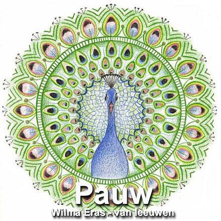 1. Pauw