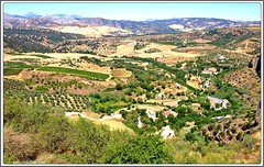 CAMPOS DE RONDA (LUIS FELICIANO) Tags: espaa ciudad andalucia ronda malaga