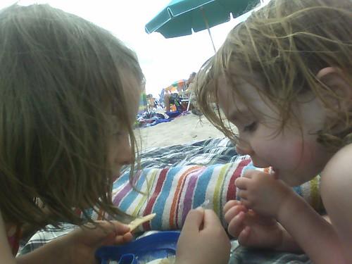 Examining their sea shells