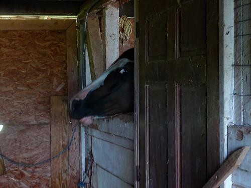 HorseFarm21.jpg by you.