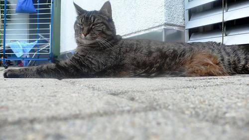 Tabby on guard
