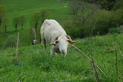 Trek - Port de pierrefitte - mouton