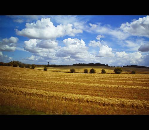 Salisbury's countryside