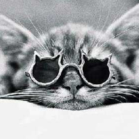 cat_with_glasses copy