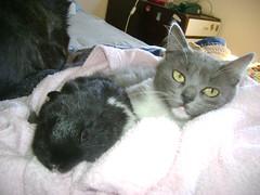 cómodas??? (...aleliya...) Tags: conejo perro bichos gatito mimosos