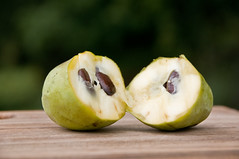 pawpaw with seeds