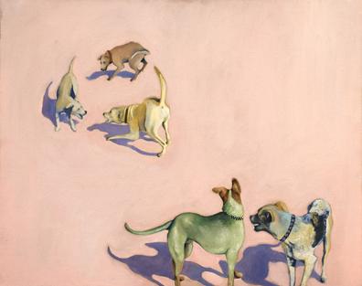 cimino_dogs_web