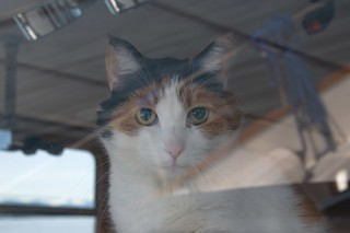 Lucy the Ship's Cat on Watch