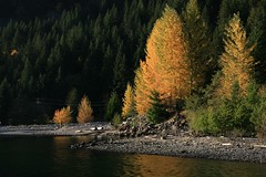 fiery other shore (Vida Morkunas (seawallrunner)) Tags: autumn black colour green fall leaves yellow turn forest path diablo cwall perimetertrail sitwalkwrite sourdoughfalls