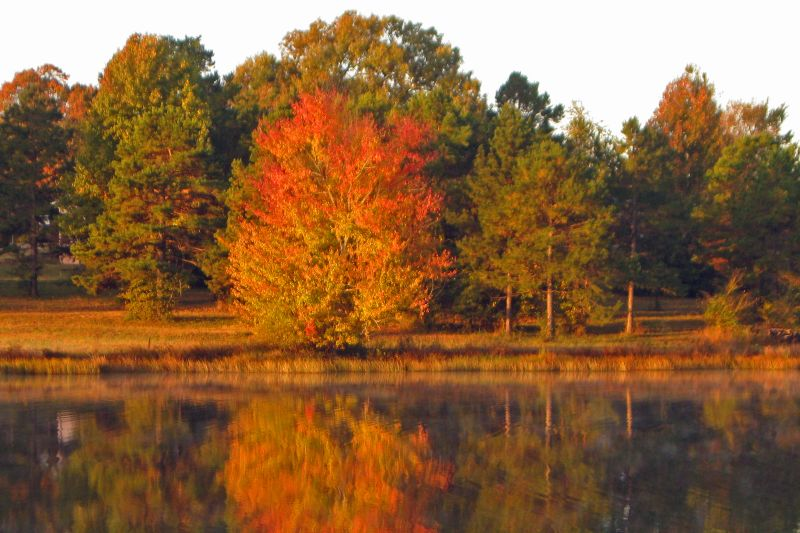 Cox Lake Autumn Splendor