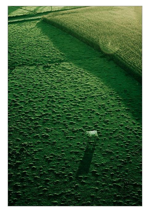 http://farm4.static.flickr.com/3231/2999249928_a315e8af68_o.jpg