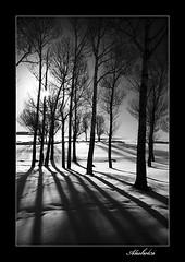 ( Ali Shokri / www.alishokri.com) Tags: winter light bw snow nature landscape shadows iran azerbaijan tabriz abigfave wwwalishokricom alishokri