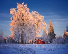 Et rødt lite hus / A little red house (Krogen) Tags: winter norway norge vinter december norwegen noruega scandinavia akershus desember gardermoen romerike krogen noorwegen noreg ullensaker skandinavia olympusc7070