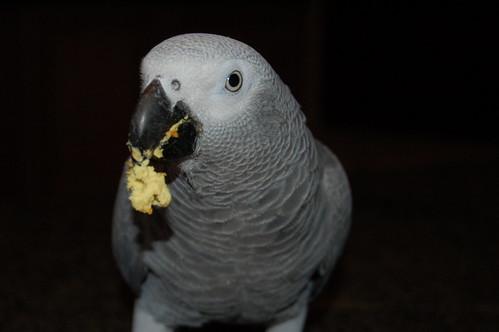 Obesity In Parrots
