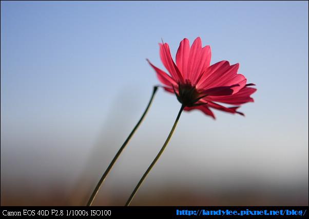 9711-新社花海:Date with Bee_003.jpg