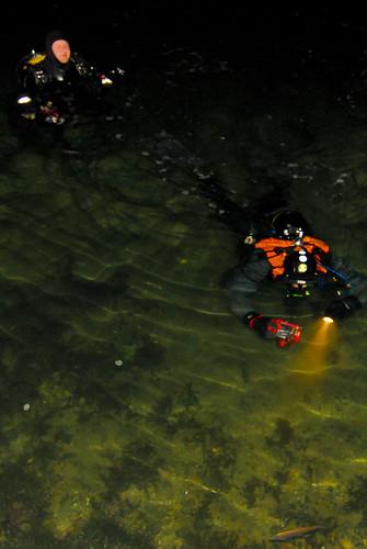 7c555a54b Nordisk nattdykk 2008 [Arkiv] - Dykkesiden