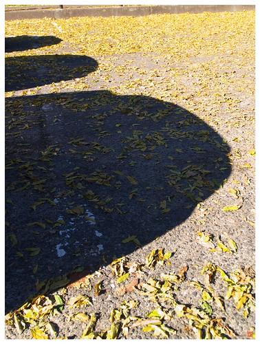 Shadow 081206 # 02