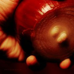 palmful (nezua) Tags: red animal flesh rust warm shine hand burgundy maroon vegetable growth reflect human raspberry layers chopped onion stalk hold redonion grasp nodule