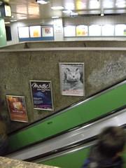 Subway Ad Cat