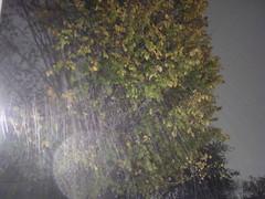 Snow! - 12-10-2008 (capella_7009) Tags: longexposure light snow tree night texas houston snowtrails 12102008