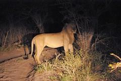 Tembe_Aug-2008_055 (Eagle Eye22) Tags: elephant southafrica wildlife reserve kwazulunatal tembeelephantpark