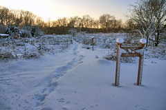 belmont victory gardens in the snow