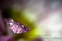 Sunrise.. (QiYaDiYa) Tags: flower macro canon 100mm fatma almeer 400d qiyadiya
