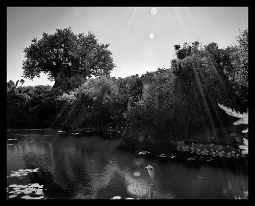 black and white photography trees. In Black amp; White - Tree of