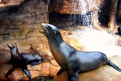 Sea World Sea Lions (skittleydoo04) Tags: california travel family vacation fun sandiego memories seal amusementpark sealion seaworld 2007 potofgold digitalcameraclub skittleydoo04