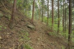 穴路峠の杉林