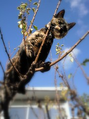 Milly helping with Apricot pruning