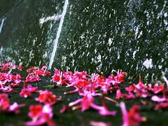 (isokari design works) Tags: pink flower green    isokari