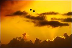 Solstice d'été. (glemoigne) Tags: sunset brittany bretagne breizh solstice chough coucherdesoleil finistère ouessant iroise penarbed ushant craveàbecrouge glemoigne gilbertlemoigne
