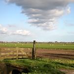 Beemster: Rijperweg landscape in autum