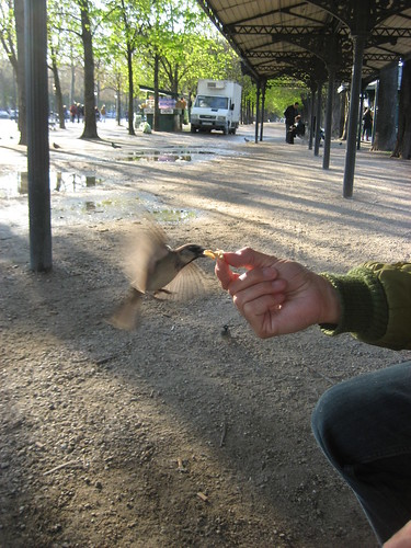 Feeding crepe to the birds