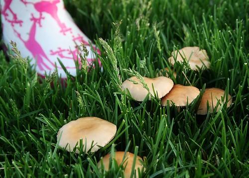 don't eat the mushrooms