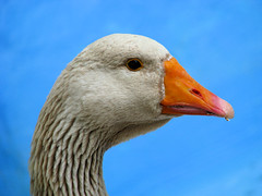 Aflac!!!!!!!!!!!!!!!!!