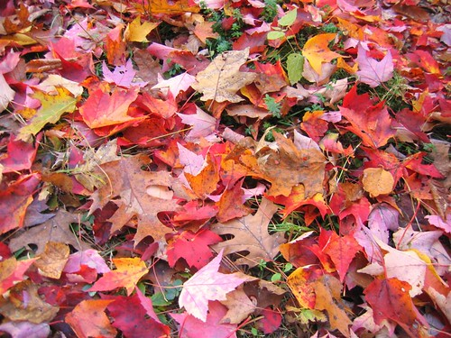 Red leaves on the ground at Grafton