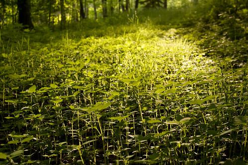 Tiny Golden Plants