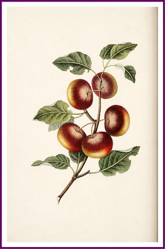 004-Manzanas