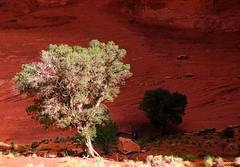 20080802-_MG_3042-Edit (buddy4344) Tags: arizona landscape navajo monumentvalley navajotriballand