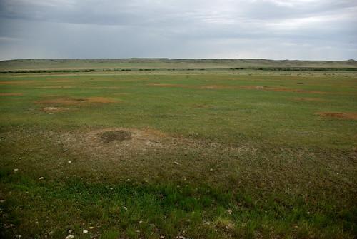 Prairie Dog Colony