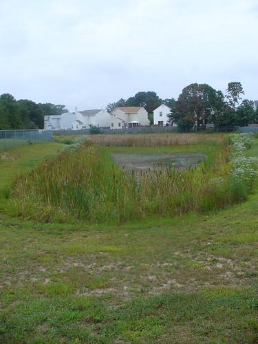 Pond - Noon