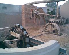 Water Source (Muhammad Rashid Mukhtar) Tags: fort derawar
