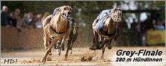 Greyhounds Prisma Catrien