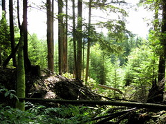 Baden Powell Trail - Grouse Mountain
