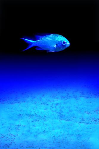 PLANET BLUE DSCN3465