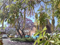 Furry snake bean trees (AnnaAniston) Tags: jacaranda grafton